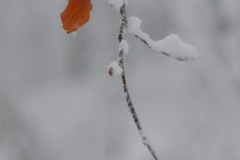 snowflake-9